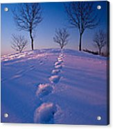 Footsteps Acrylic Print by Cale Best