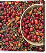 Foraged Rose Hips Acrylic Print by Tim Gainey