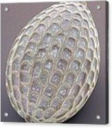 Foraminiferan, Sem Acrylic Print by Power And Syred