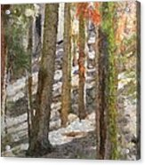Forest For The Trees Acrylic Print by Jeff Kolker