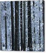 Forest In Winter Acrylic Print by Bernard Jaubert