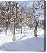 Forest Ofconstantine Acrylic Print by Boultifat Abdelhak badou