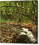 Forest River Acrylic Print by Elena Elisseeva