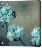Forget Me Not 01 - S22dt06 Acrylic Print by Variance Collections