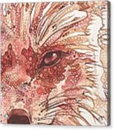 Fox Acrylic Print by Tamara Phillips