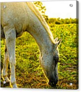 Freckles At Sunset Acrylic Print by David Morefield
