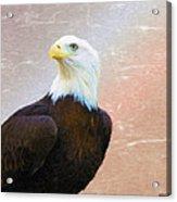 Freedom Flyer Acrylic Print by Jeff Kolker