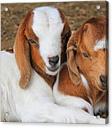 Friends Forever Acrylic Print by Leslie Kirk