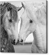 Friends Iv Acrylic Print by Tim Booth