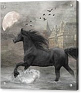 Friesian Fantasy Acrylic Print by Fran J Scott