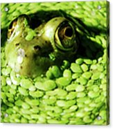 Frog Eye's Acrylic Print by Optical Playground By MP Ray