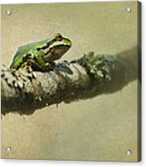Frog Up A Tree Acrylic Print by Angie Vogel