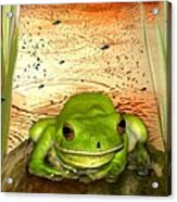 Froggy Heaven Acrylic Print by Holly Kempe
