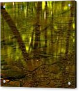 From River Rocks To Forest Reflections Acrylic Print by Adam Jewell