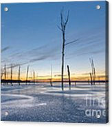 Frost Bite Acrylic Print by Michael Ver Sprill