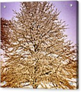 Frosted Branches Acrylic Print by Marty Koch