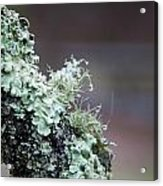 Frosted Moss Acrylic Print by Mary Katherine Powers