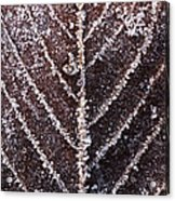 Frozen Leaf Acrylic Print by Anne Gilbert