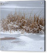 Frozen Reeds Acrylic Print by Julie Palencia