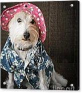 Funny Doggie Acrylic Print by Edward Fielding