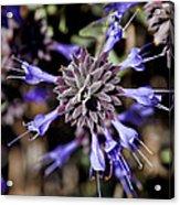 Fuzzy Purple 3 Acrylic Print by Kelley King