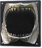 Gaint Shark Jaw Sculpture Acrylic Print by Stuart Peterman