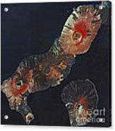 Galapagos Islands Acrylic Print by Spot Image