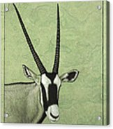 Gemsbok Acrylic Print by James W Johnson