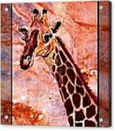 Gentle Giraffe Acrylic Print by Sylvie Heasman