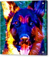 German Shepard - Electric Acrylic Print by Wingsdomain Art and Photography