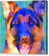 German Shepard - Painterly Acrylic Print by Wingsdomain Art and Photography