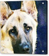 German Shepherd - Soul Acrylic Print by Sharon Cummings