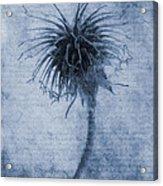 Geum Urbanum Cyanotype Acrylic Print by John Edwards