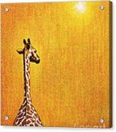 Giraffe Looking Back Acrylic Print by Jerome Stumphauzer