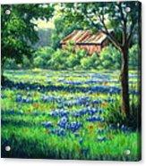 Glen Rose Bluebonnets Acrylic Print by Vickie Fears