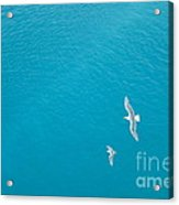 Gliding Seagulls Acrylic Print by Jacqueline Athmann