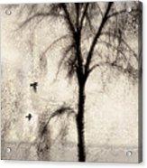 Glimpse Of A Coastal Pine Acrylic Print by Carol Leigh