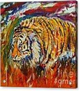 Go Get Them Tiger Acrylic Print by Anastasis  Anastasi