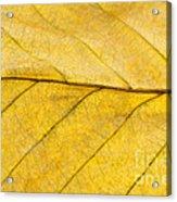 Golden Beech Leaf Acrylic Print by Anne Gilbert