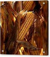 Golden Harvest Acrylic Print by Charlene Palmer
