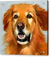Golden Retriever Dog Acrylic Print by Alice Leggett