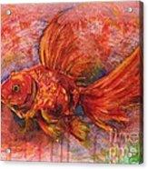 Goldfish Acrylic Print by Zaira Dzhaubaeva
