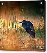 Goliath Heron With Sunrise Over Misty River Acrylic Print by Johan Swanepoel