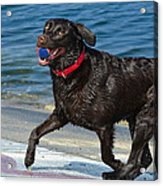 Good Boy Acrylic Print by Fraida Gutovich