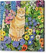 Gordon S Cat Acrylic Print by Hilary Jones