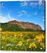 Gothic Meadow Acrylic Print by Darren  White