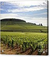 Grand Cru And Premier Cru Vineyards Of Aloxe Corton. Cote De Beaune. Burgundy. Acrylic Print by Bernard Jaubert