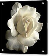 Grandeur Ivory Rose Flower Acrylic Print by Jennie Marie Schell