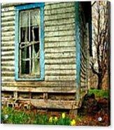 Grandma's Daffodyls Acrylic Print by Julie Dant