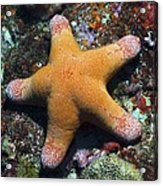 Granulated Seastar Acrylic Print by Science Photo Library